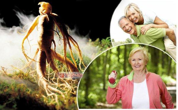 Nhân sâm giúp bồi bổ sức khỏe người già