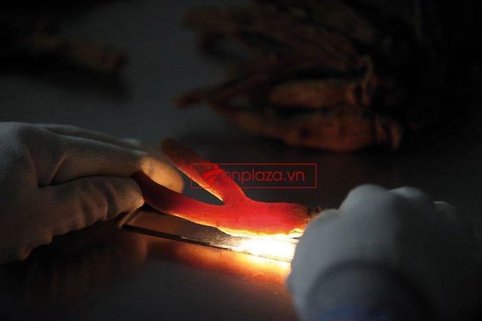 một sô hình ảnh trong quá trình chế biến và sản xuất hồng sâm chính phủ kgc hôp thiếc 2