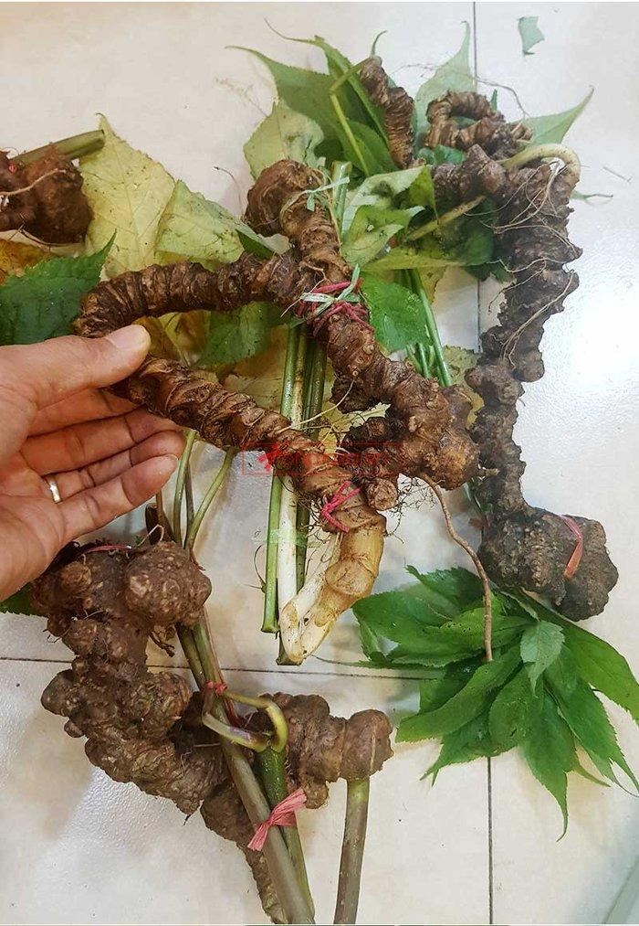 Sâm Ngọc Linh trồng loại 1 (1,3 - 2 lạng/củ), 10 – 20 năm tuổi, 4 đến 7củ /kg) NS180 2