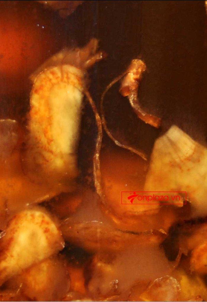 Sâm Ngọc Linh và đông trùng hạ thảo ngâm mật ong bình 7lít NO.12 NS672 3