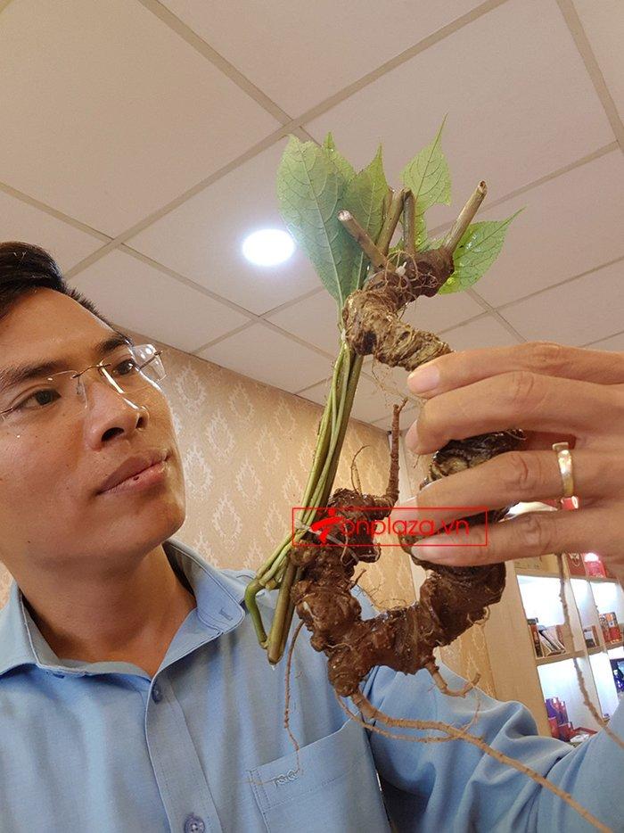 Sâm Ngọc Linh rừng loại 5 củ/kg 1