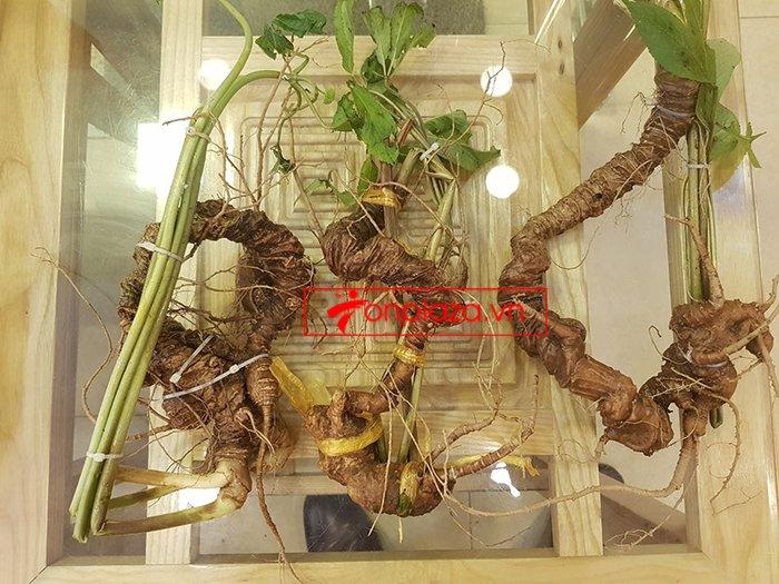 Sâm Ngọc Linh rừng loại 5 củ/kg 2